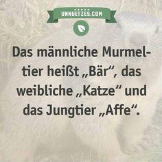 """Daher stammt der Name """"Murmeltier"""": http://www.unnuetzes.com/wissen/12670/murmeltiere/"""