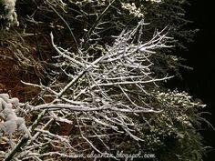 Hohle Gasse nachts und bei Schneefall Wilhelm Tell, Winter, Dandelion, Flowers, Plants, Snow, Winter Time, Dandelions, Florals