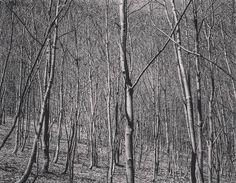 #lackoj #forrest #trees #blackandwhitephotography #fujifilmx100s