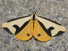 A Passion for Moths-