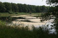 Die Stallberger Teiche bei Lohmar eignen sich zum Wandern - auch bei sengender Hitze!