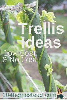 Trellises serve an i