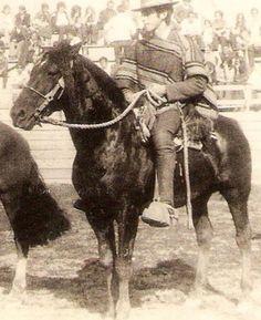 Chilean horse purebred- Caballo Chileno de pura raza record since 1893. Potro Inocente