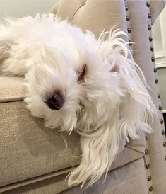 Maltese and Children: Is It a Good Combination - Champion Dogs Cute Puppies, Cute Dogs, Dogs And Puppies, Doggies, Maltese Dogs, Teacup Maltese, Dog Rules, Tier Fotos, Training Your Dog