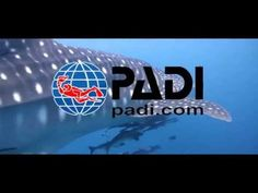 Professional Association of Diving Instuctors incl. nitrox The Way the World Learns to Dive. PADI is the world's leading scuba diver training organiza. Padi Diving, Scuba Diving, Professional Association, Videos, Learning, World, Youtube, Video Production, Diving