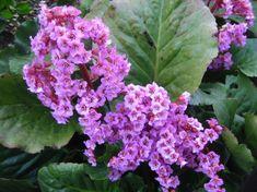 25 talajtakaró növény, melyekkel gyönyörűvé teheted a kertet! - CityGreen.hu