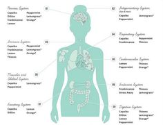 The Surprising Science behind Essential Oils & Digestive Health. | elephant journal