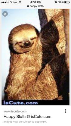 Happy Animals, Cute Baby Animals, Animals And Pets, Funny Animals, Wild Animals, Cute Sloth Pictures, Animal Pictures, Cute Baby Sloths, Baby Otters