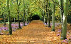 Alvin Guillermo from Cherry Hinton, Cambridge took this photo  at Anglesey Abbey Garden.