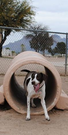 Top Tucson Dog Parks