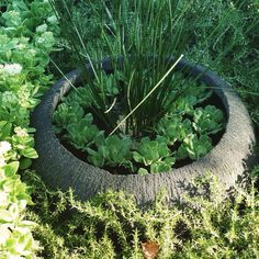 Water Features Direct Garden Accessories, Water Features, Plants, Water Sources, Plant, Backyard Ponds, Water Toys, Planets