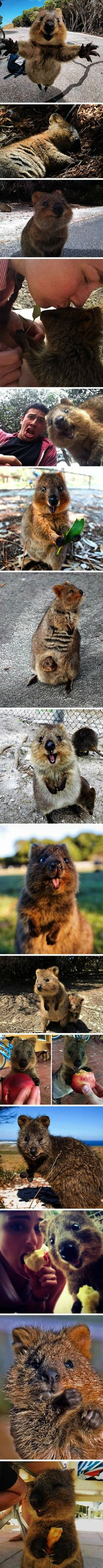 best cute animals images on pinterest in fluffy animals