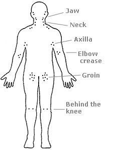 lymphatic system groin