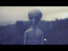 Area 51 gray Alien (Videos) – Two Feed Alien Gris, Grey Alien, Paranormal, Aliens And Ufos, Ancient Aliens, Ancient History, Area 51 Facts, Alien Videos, Ufo Footage
