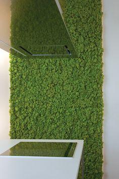 MOSS Wall- chrobotek skandynawski często mylony z mchem. Ale fajny materiał do tworzenia zielonych ścian.