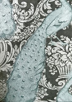 Today I saw this wallpaper in a display window in Stockbridge. Its from Cole and Son, dark silver damask motif and metallic silver/aqua peacocks. It is absolutely beautiful. Photo does not do it justice.