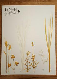 акварель, травы и сухоцветы