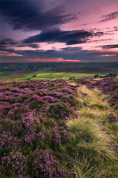 Heather blooming on Stanton Moor, Peak District, Derbyshire Peak District, Landscape Photography, Nature Photography, Nature Sauvage, Camera World, To Infinity And Beyond, English Countryside, Belleza Natural, Amazing Nature