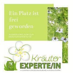 Lehrgang zum/zur Dipl. Kräuterexperten ein ganz besonders umfangreicher und schöner Lehrgang der FNLKräuterakademie. Es gibt noch einen freien Platz für Raum Vorarlberg! Für Kurzentschlossene!