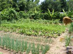 Growth Hormone, Different Plants, Take Action, Organic Farming, Go Green, Permaculture, Livestock, Vineyard, This Is Us