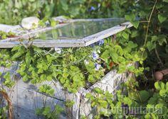 Kannellinen kasvulaatikko antaa suojaa tuulelta ja alkukesän koleilta öiltä. Ja onhan tämä aivan hurmaavan näköinen! www.kotipuutarha.fi
