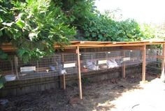 Teds Woodworking® - Woodworking Plans & Projects With Videos - Custom Carpentry Rabbit Hutch Plans, Rabbit Hutches, Rabbit Farm, Rabbit Cages, Meat Rabbits, Raising Rabbits, Chicken Nesting Boxes, Livestock Farming, Outdoor Tables