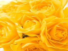 6 Golden Rose Scented Candle Tarts Wax Melts 6oz by AmbersAromas4U, $5.75