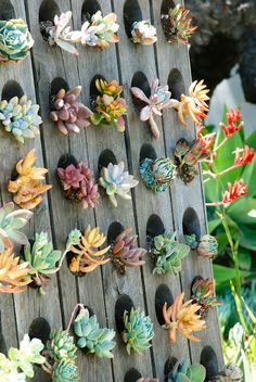 Succulents planted in a vintage French riddling rack -a wooden rack originally intended for vintners of sparkling wine