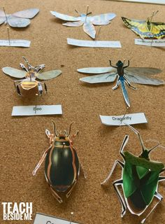 Fun for zoo Printable paper insect display- nature science via Karyn Informations About Prin Preschool Science, Teaching Science, Science Activities, Science Worksheets, Science Ideas, Elementary Science, Preschool Learning, Science Education, Teaching Ideas