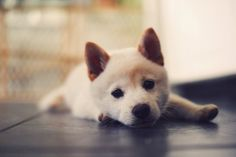 Raise my own dog. I want a puppy in my life so badly.