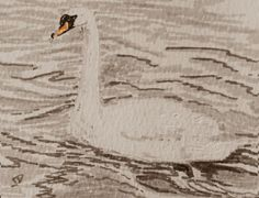 Swan swimming, with ripples in water ACEO