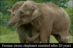 Amazing Pictures, Elephants reunited after 20 years