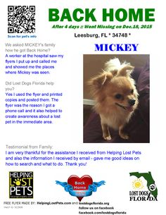Helping Lost Pets   Dog - Papillon - Back Home
