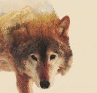 "Acrylic painting ""Lone Wolf"""
