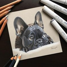 Discover The Playful Frenchie Puppies Size Dog Pencil Drawing, Pencil Drawings Of Animals, Realistic Drawings, Art Drawings, French Bulldog Drawing, Crayons Pastel, Bulldog Images, Color Pencil Sketch, Dog Portraits