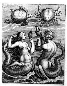 Collectie flora en fauna (1592) PUBLIC DOMAIN