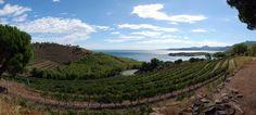 Finca Garbet: an amphitheater of the Mediterranean Vineyard, Outdoor, Growing Up, Outdoors, Vine Yard, Vineyard Vines, Outdoor Games, The Great Outdoors