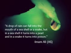 A drop of rain can fall into the mouth of a sea or a snake, but in a sea shell it turns into a pearl and in a snake it turns into poison. -Imam Ali (AS)