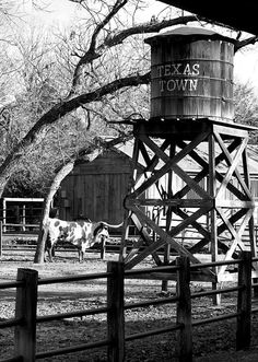 Texas Longhorn with water tower