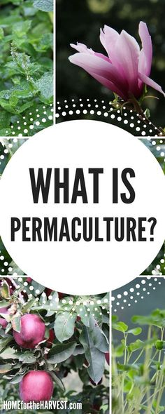 Wondering what permaculture is? Is it just organic gardening...or is there something more? Check out this post to understand what permaculture is and how to use it in your organic garden! #permaculture #whatispermaculture #beyondorganic #organicgardening #gardening #beginnergardening #howtogarden