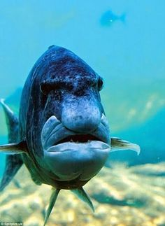 share terrifying photos of their angry animals : Owners share photos of their angry animals Underwater Creatures, Underwater Life, Ocean Creatures, Angry Animals, Funny Animals, Fauna Marina, Water Animals, Wale, Tier Fotos