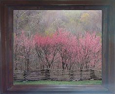 Impact Posters Gallery Redbud Tree Grove in Bloom Natchez Trace Parkway Landscape Wall Decor Brown Framed Picture Art Print