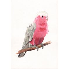 This painting makes me miss home // Galah painting - bird print of watercolor painting 5 by 7