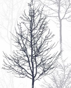 Scandinavian Print Forest Print Tree Art Black And by exileprinted Black And White Posters, Black And White Wall Art, Tree Canvas, Canvas Art, Wall Art Decor, Wall Art Prints, Feature Wallpaper, Affordable Wall Art, Black Tree