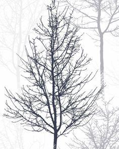 Minimalist Poster, druckbare Kunst, Bäume, Zweige, skandinavische Kunst, Wall Decor, abstrakte Wandkunst, abstrakte Baum, Instant Download druckbare