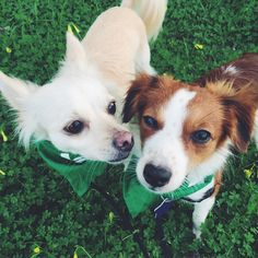 Dog walking app with live GPS tracking! Wag Dog Walking, Walking App, Adorable Puppies, Adorable Animals, Wag App, Pet Fashion, Gps Tracking, Cute Creatures, I Love Dogs