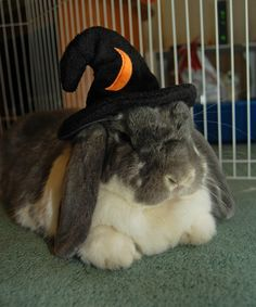 Bunny is a wizard for Halloween - October 31, 2012