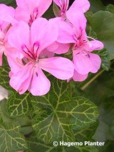 White Mesh med logo 4981 Planters, Lily, Pictures, Plant, Window Boxes, Pot Holders, Flower Planters, Pots
