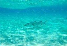 Barracuda Acquarius Sea Tours - Google+