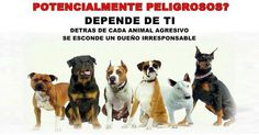 Remove the classification of potentially dangerous dogs Dangerous Dogs, Dog Signs, How To Remove, Dogs, Animals